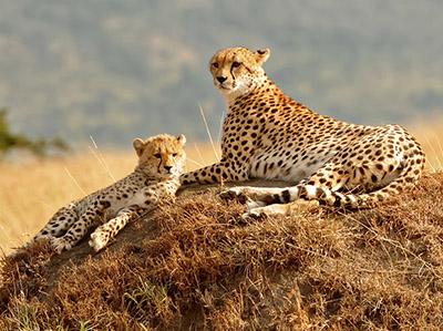 Untamed Africa Safari